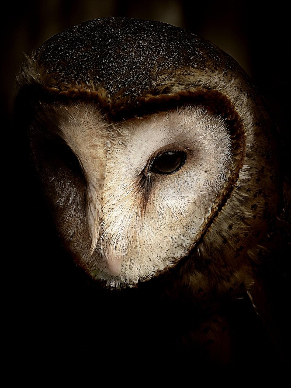 stock photos free  of black background owl