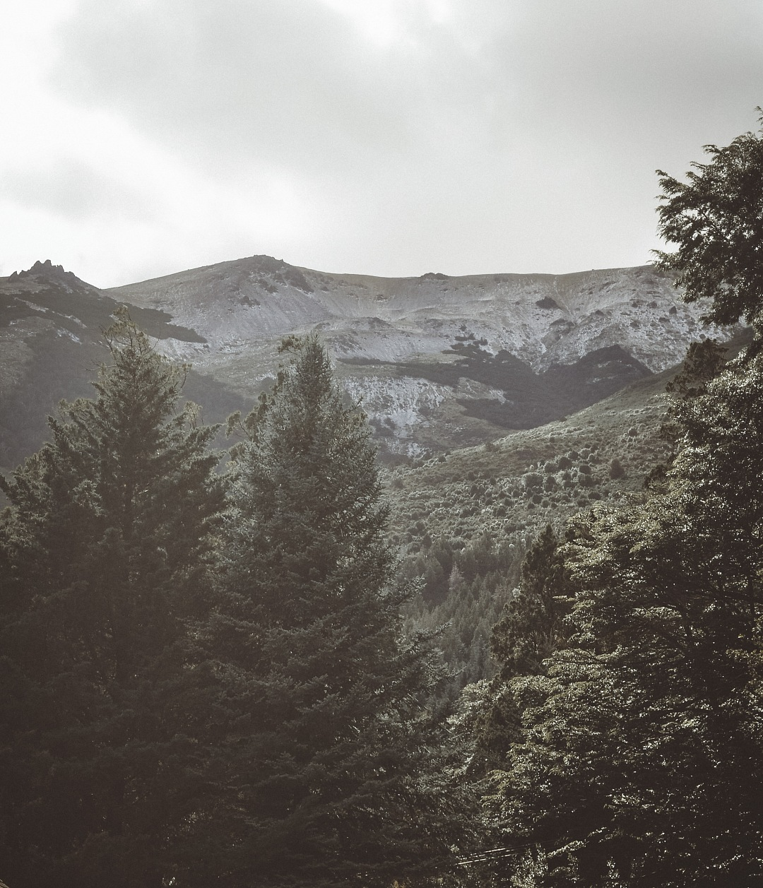 stock photos free  of Mood green forest mountain landscape