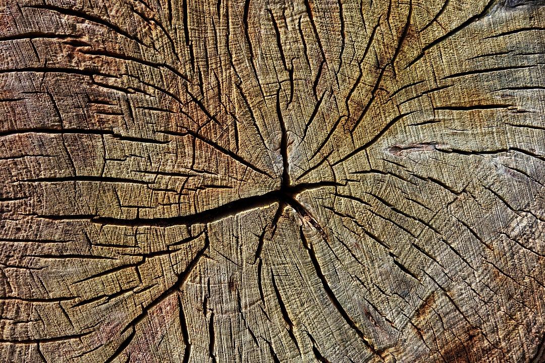 stock photos free  of Texture wood of  broken trunk