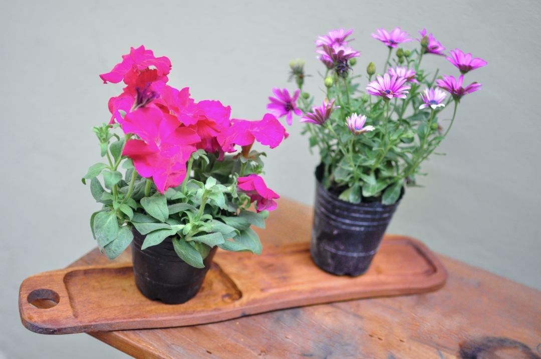 stock photos free  of Garden flowers