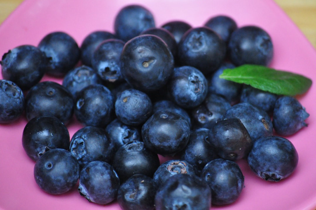 stock photos free  of blueberries closeup macro