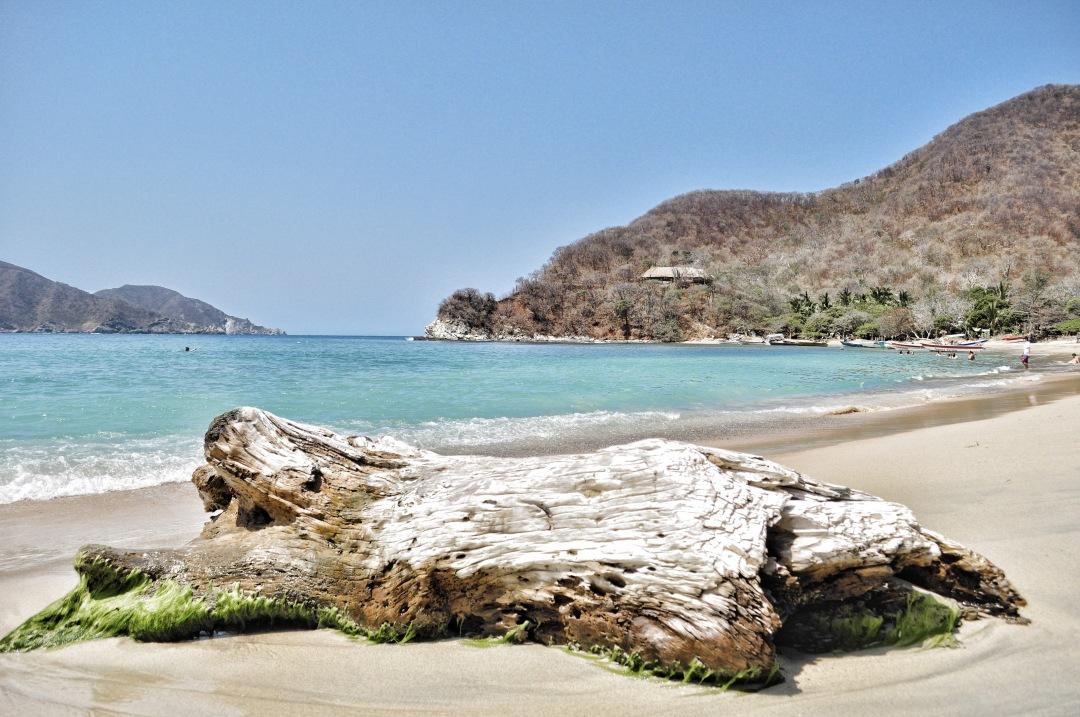 stock photos free  of Fosil rock on Tayrona Caribean Colombia