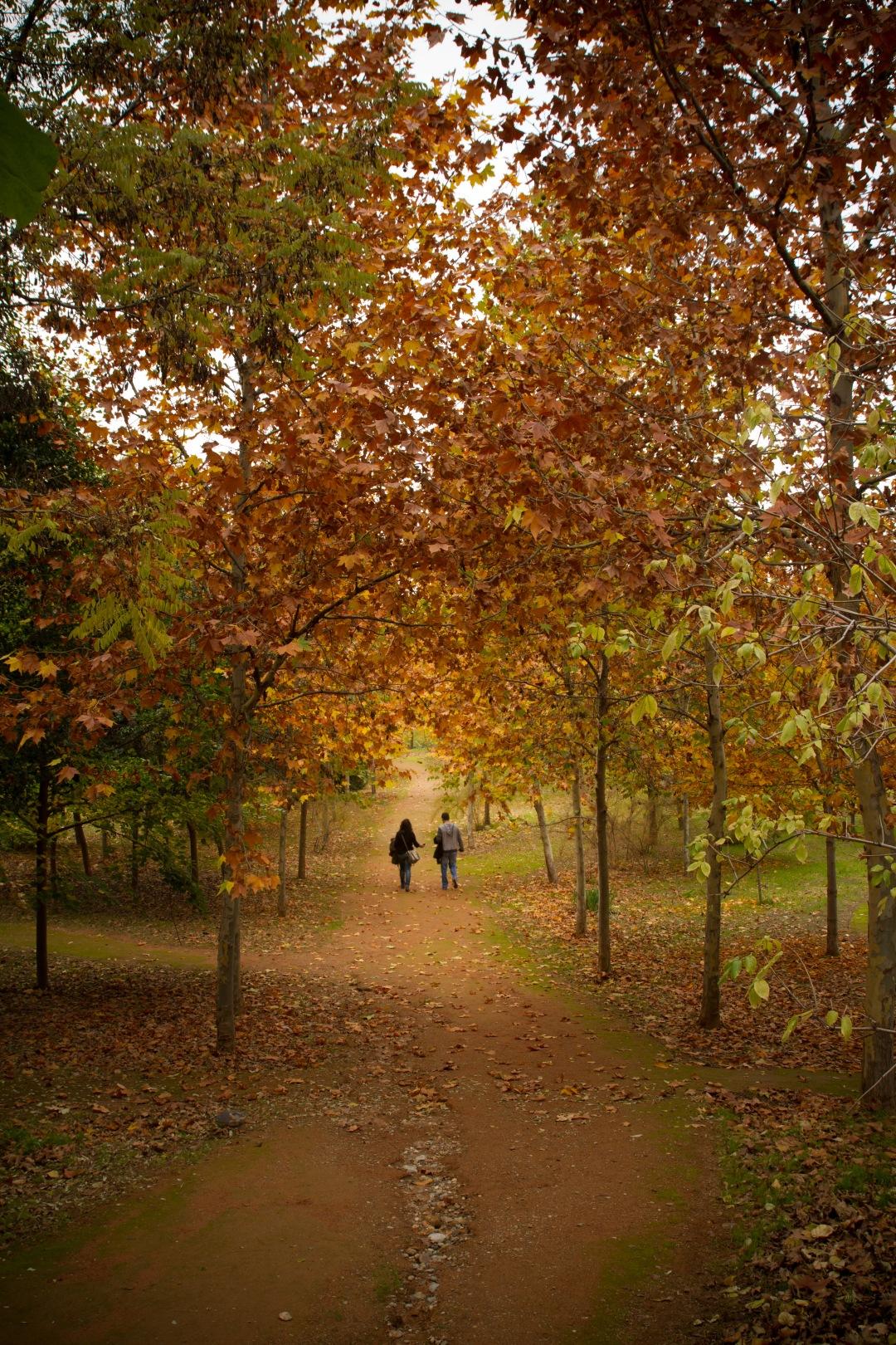 stock photos free  of autumn