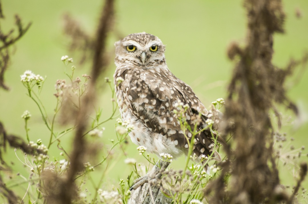 stock photos free  of owl rest on green forest