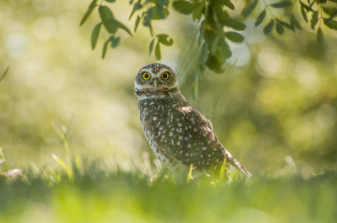 stock photos free  of Owl surprise