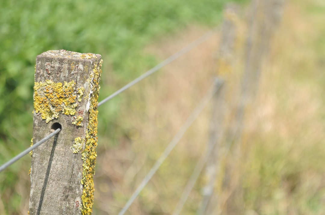 stock photos free  of field fence