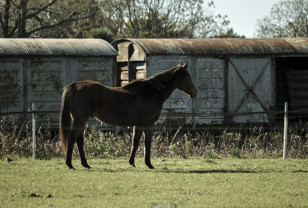 stock photos free  of Rural Scene With A Horses on train station