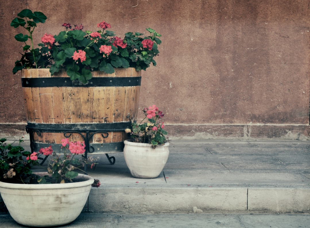 stock photos free  of Outdoor flowers