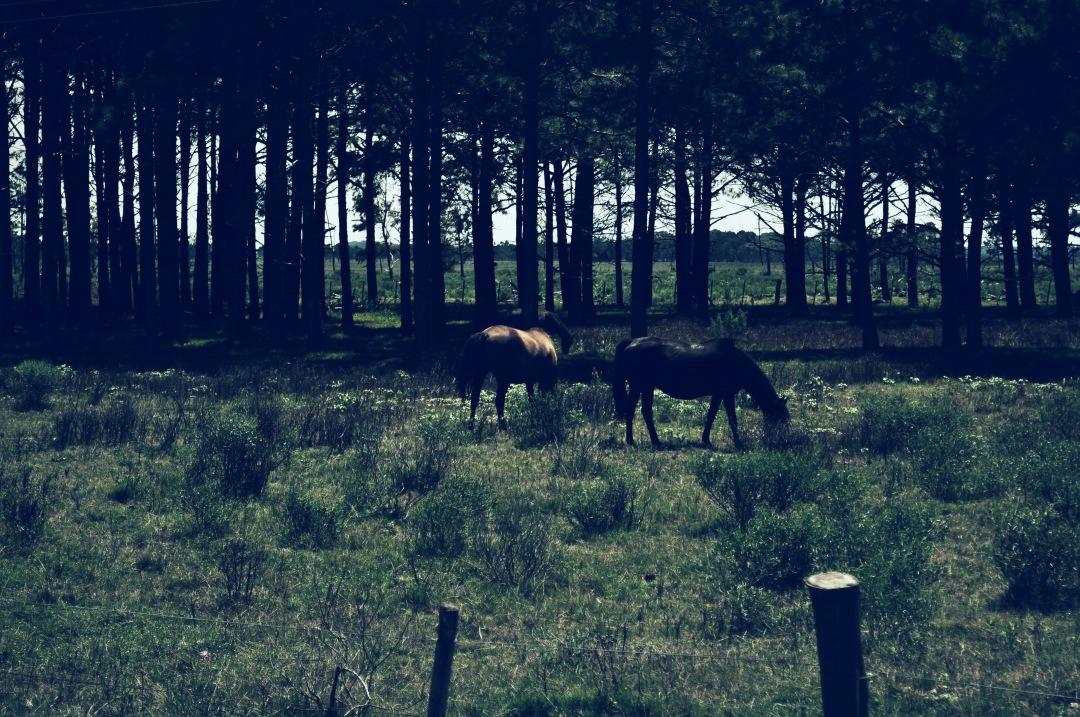 stock photos free  of Horses Field