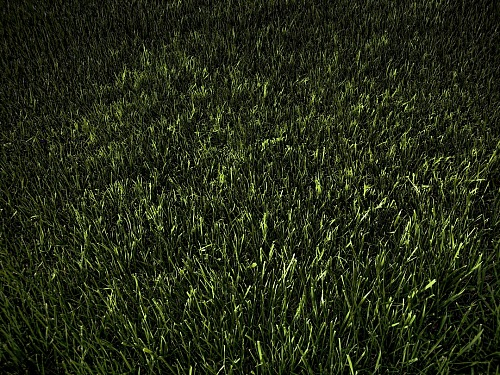 photo Green grass texture free for commercial use images