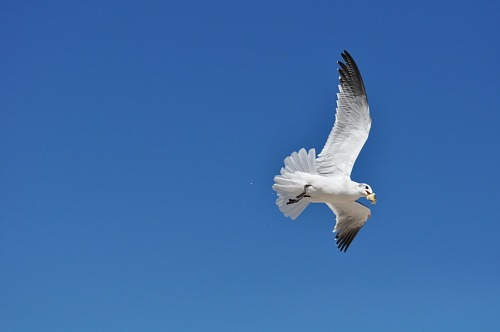 free for commercial use Seagull flying on blue sky with food images