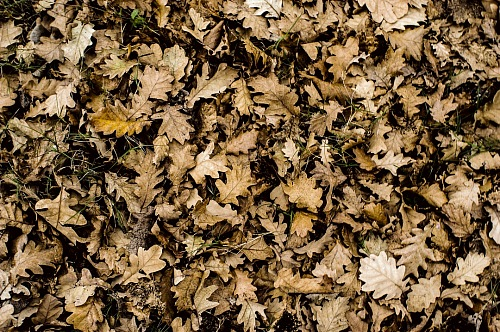 Autumn leaves wallpaper texture