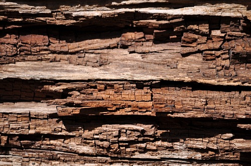 free for commercial use wood background tree images
