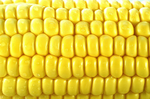 macro photo of yellow corn grains