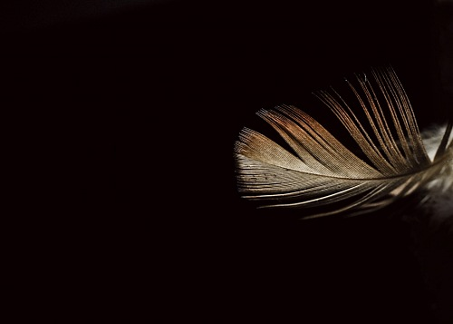 feathers on black background