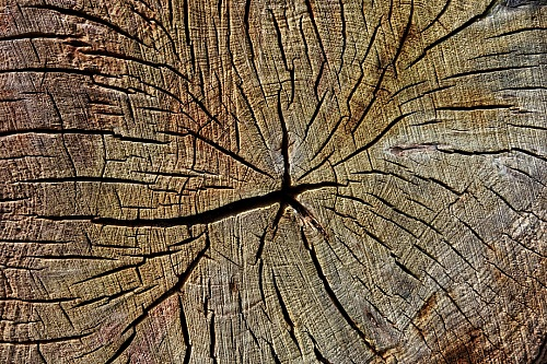 photo Texture wood of  broken trunk free for commercial use images