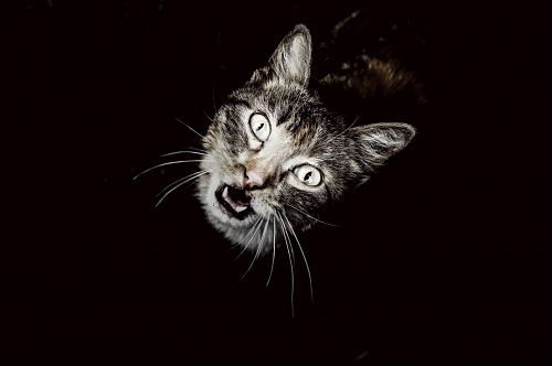 Top view of dramatic cat with black background