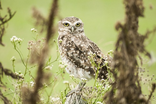 owl rest on green forest