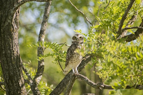 free for commercial use Owl images