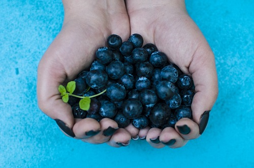 free for commercial use Blueberries on woman hand images