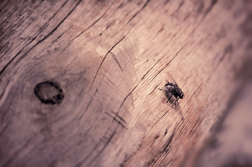 free for commercial use fly over tree trunk images