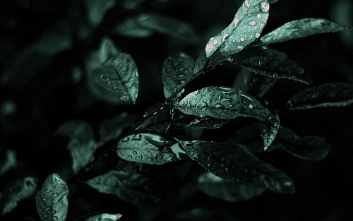 Nature Dark Leaves Macro Depth
