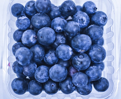 photo Ripe and juicy fresh picked blueberries free for commercial use images