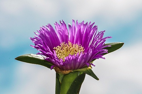 Macro of purple flower over blue sky