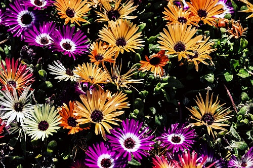 Background of multicolor flowers