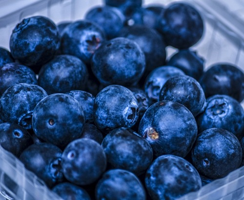 Organic Blueberry Fresh stock photo