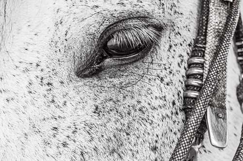 close-up of black and white horse eye